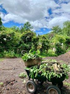植栽と家づくり